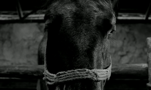k.onodera 2012年黒獅子ベストテン
