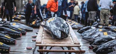 """『築地ワンダーランド』は""""魚を食べる""""認識が変わる 築地市場の深部を捉えたドキュメンタリー"""